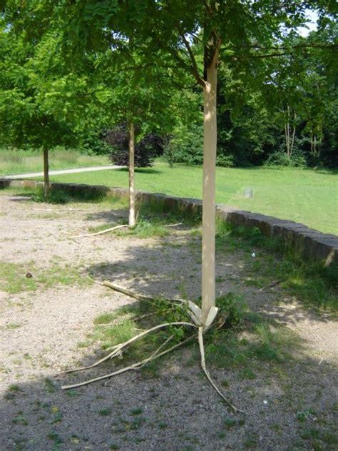 Baum Tieferlegen by Baumschutz In K 246 Ln Aktuelles