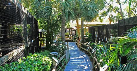 Detox Punta Gorda by Peace River Wildlife Center Information Must Do Visitor