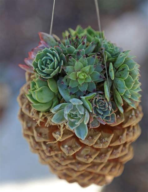 succulant planter diy hanging pine cone succulent planter succulents