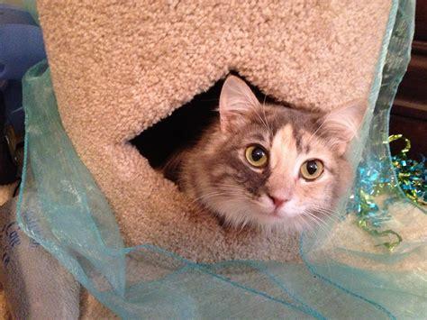 cerebellar hypoplasia in dogs family welcomes cat with feline cerebellar hypoplasia lessons