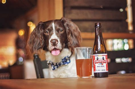top dog bar have dog will travel the 35 best dog friendly hotels in