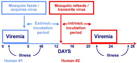 Dengue Hemorrhagic Fever Thesis by Dengue Thesis Questionaire Quot Letter For Validation Of Kap