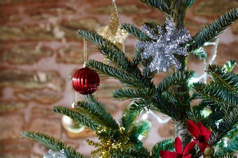 stop christmas tree dropping needlea avoid tree needle drop gardenersworld