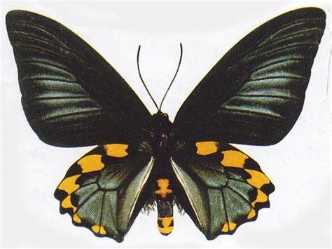 membuat puisi kupu kupu kupu kupu kertas andon surya linova