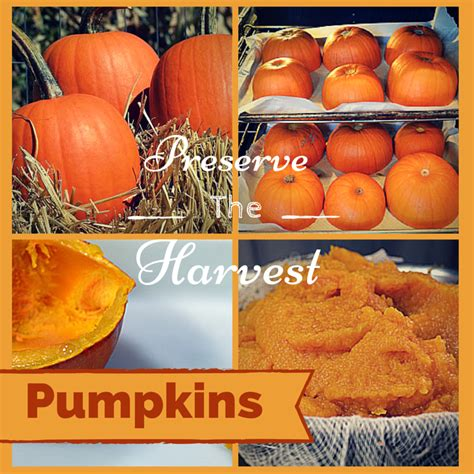 whole pumpkin preservation how to preserve and store pumpkin