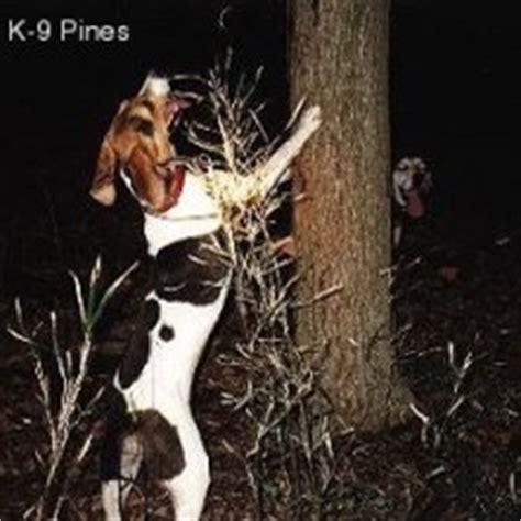 walker coonhound puppies for sale treeing walker coonhound puppies for sale