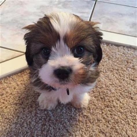 puppy vines puppy vines on quot imagine waking up to this https t co