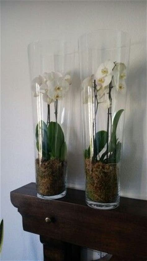 Decoratie In Hoge Glazen Vaas by 25 Beste Idee 235 N Hoge Vazen Op Hoge Vaas