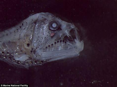 download mp3 gigi ikan laut ikan pemarah penghuni gunung api bawah laut mongabay co id