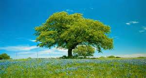Small Desktop Tree The Pythagorean Storyteller 70 On Comparisons Zen Story