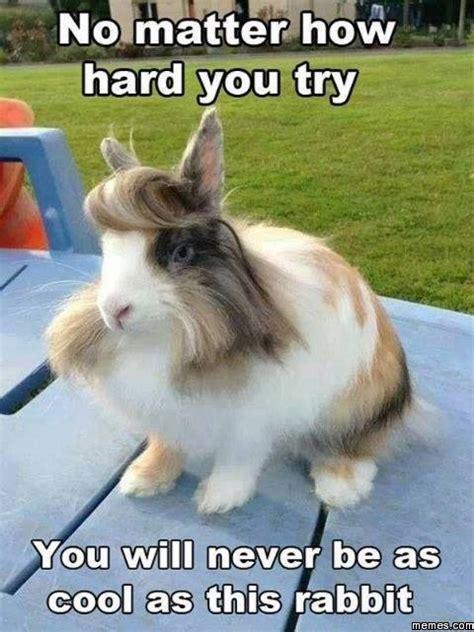 Rabbit Meme - coolest rabbit ever memes com