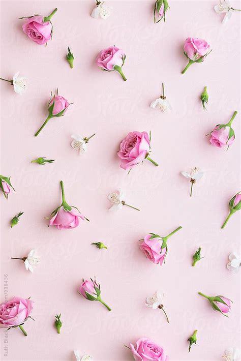 Rosebud Pipih stock photo rosebud and blossom background floral