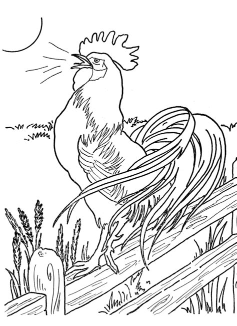 Rooster Coloring Pages For Adults Coloring Pages Rooster Coloring Page