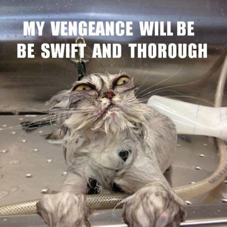 Funny Angry Cat Meme - top 20 funniest angry cat memes here is a collection of