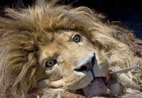imagenes animales asombrosos time mira las 50 mejores im 225 genes de animales asombrosos
