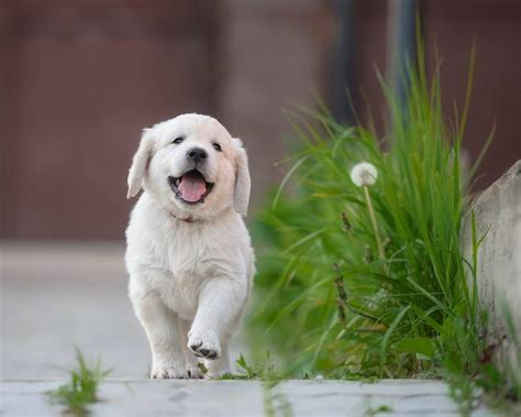 puppie pics happy national puppy day mnn nature network