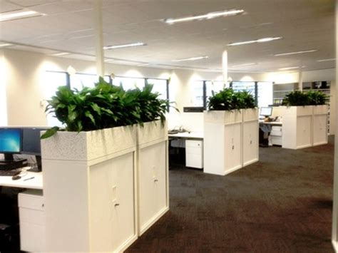 Office Planter by Office Plant Hire Sydney Perfection Plant Hire