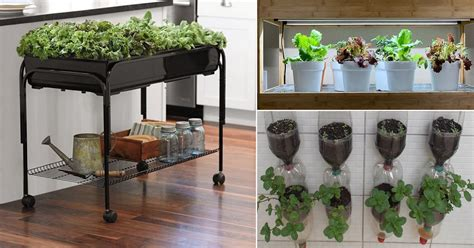 indoor vegetable garden ideas balcony garden web