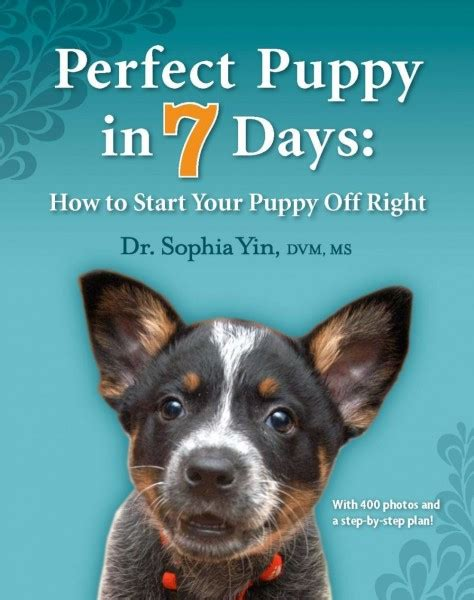 when to start your puppy puppy in 7 days how to start your puppy right dr yin