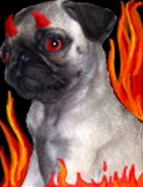 evil pug evil pug by dazed1 on deviantart
