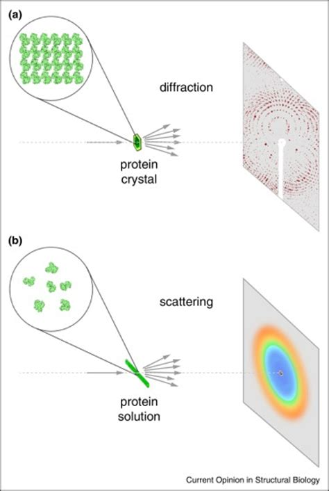 protein x diffraction pattern time resolved x diffraction from protein crystals and