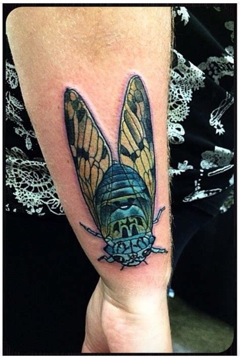 cicada tattoo 17 best images about ideas on moth