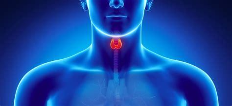tiroide alimentazione ipotiroidismo tiroide piccola ipotiroidismo endocrinologiaoggi roma