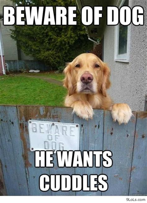 Funny Animals Memes - funny cat meme tumblr dog breeds picture