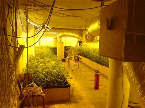 Grow Room grow room ventilation hydroponic grow shops garden centers