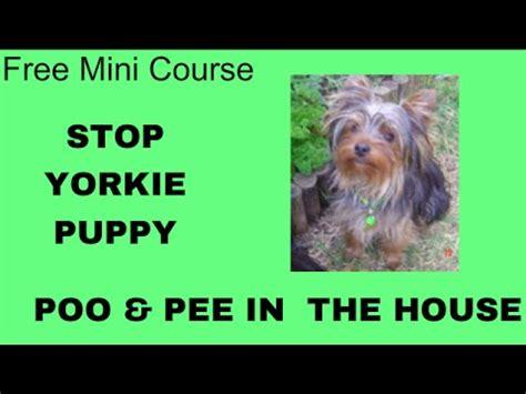 yorkie potty tips wow potty puppy yorkie terrier free mini course on potty