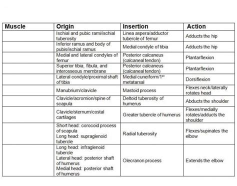 muscle origins and insertions muscle origin insertion and action 2 purposegames