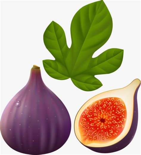 Fig Clipart purple figs purple fig leaf png image and clipart for