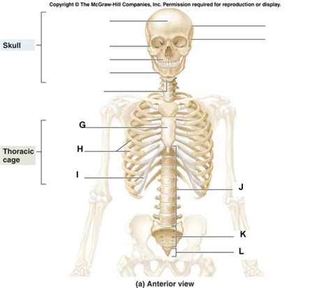 printable flash cards anatomy and physiology principles of anatomy and physiology chapter 8 flashcards