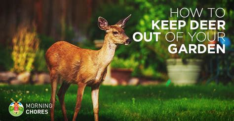 Deer Repellent 21 Ways To Keep Deer Out Of Your Garden How To Keep Deer Out Of Vegetable Garden