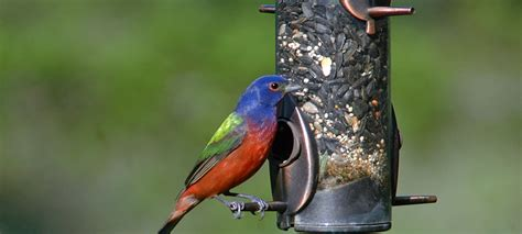 bird feeders for your dfw dallas fort worth coldwell