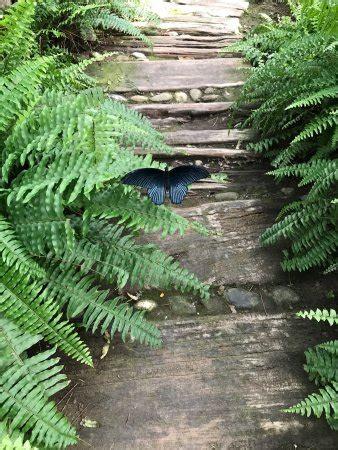 casa delle farfalle marittima casa delle farfalle marittima casa delle
