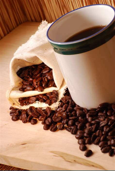 backyard coffee can i grow my own backyard coffee beans our wonderful world media