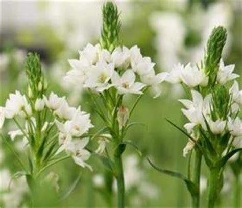 fiori recisi nomi fiori bianchi recisi stratfordseattle
