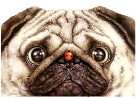 pugs in a bug shop for cards pug pug n bug limited edition print
