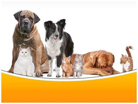 dogs and cats powerpoint template ppt slide dogs and
