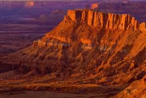 imagenes animales extraños un recorrido por los desiertos americanos