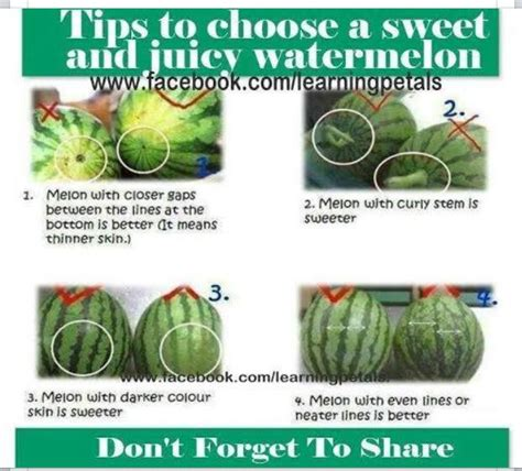 how to pick a sweet watermelon recipes i love pinterest