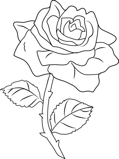 white rose clipart bunga mawar pencil and in color white
