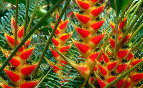 imagenes flores exoticas colombianas el 5 de junio flores tropicales colombianas se exhibir 225 n