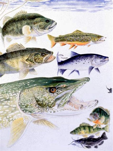 boating license upstate ny freshwater fishes nys dept of environmental conservation