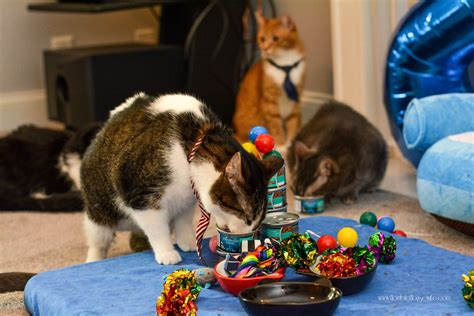 ideas for a cat cat birthday www pixshark images galleries