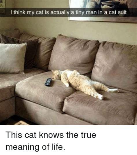 Cat In Suit Meme - 25 best memes about cat suit cat suit memes