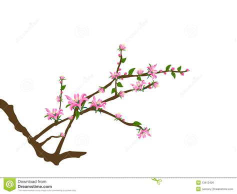 Japanese Cherry Blossom Tree tree twigs and pink flowers royalty free stock image