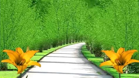 New Wedding Background Hd by Best Bg View With Yellow Flowers Free Motion