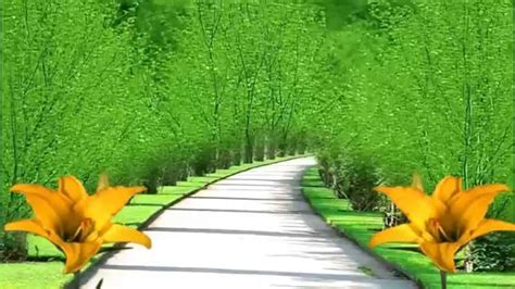 Best BG   Street View With Yellow Flowers Free Motion